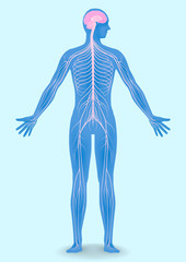 human body silhouette and nervous system, vector illustration
