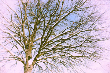 Creative vintage dry tree on a pink background. Winter oak