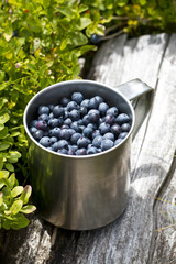 blueberries full of stainless cup in the forest