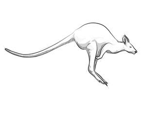 Vector sketch hand drawing kangaroo illustration jumping