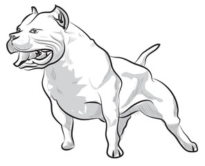 Vector sketch hand drawing illustration pitbull barking