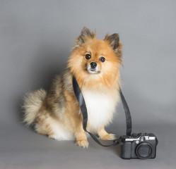 cute dog with camera digital