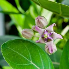 The flower in Thailand
