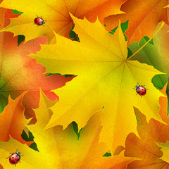 Seamless pattern of colored autumn maple leaves and ladybirds
