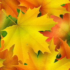 Seamless pattern of color autumn maple leaves