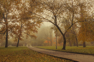 a park in the fog and autumn trees