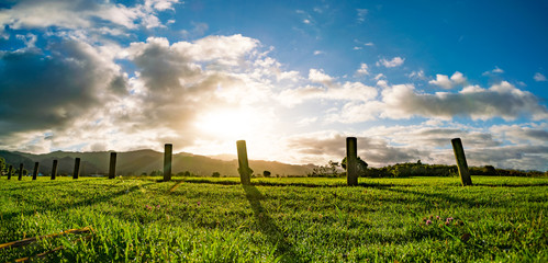 New Zealand green field sunrise or sunset