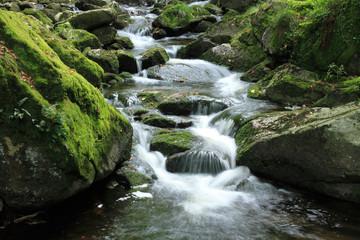 Fototapeta Mountain stream obraz