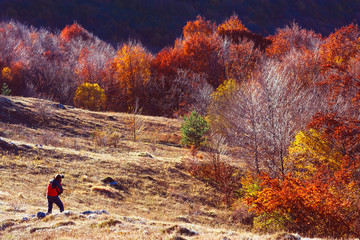 Man make photo of autumn colorful forest in mountains