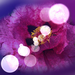 double exposure peony and grass in lilac shades with blurred bokeh as the reflection of sunlight on the diagonal