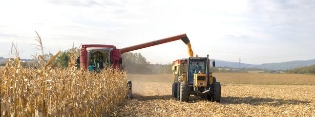 récolte du blé en juillet