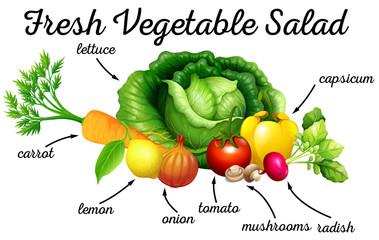 Various kind of vegetables for salad