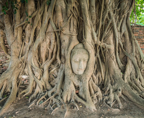 Stone head of Buddha nestled in the embrace of bodhi tree's root