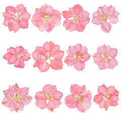 Head pressed dried flowers isolated