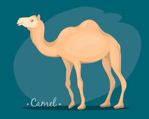 the image of a camel
