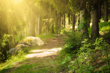 North scandinavian pine sunny forest with path and stones, Sweden natural travel outdoors background