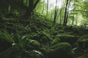 wilderness scene with green forest and moss