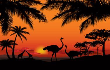 African landscape animal silhouette. Savanna sunset background