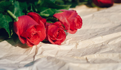 Red roses close up on old Blurred background paper
