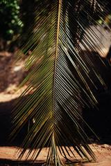 palm tree leaf on the beach