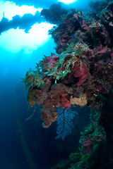Coral reef in daylight. This photo was taken during the wreckdiving in Micronesia. Actually this is wreck ship that laying underwate forr 60 years.