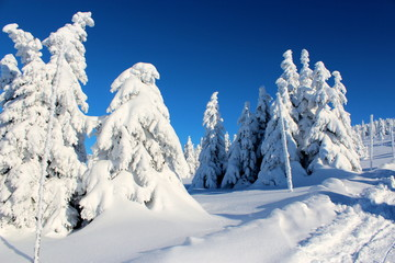 Mountain trees in the snow dresses on the