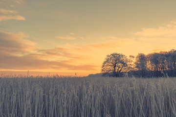 Countryside sunrise with a frosty field
