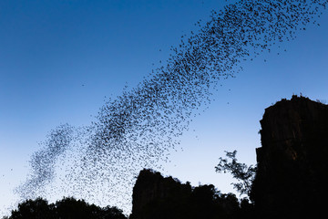 Bats forage
