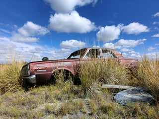 Old rusty abandoned car being overtaken by weeds - landscape photos