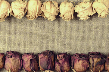 Dry white and red roses on linen canvas background