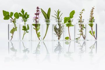 Fototapeta Bottle of essential oil with herb holy basil leaf, rosemary,oreg obraz