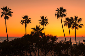 Palm trees over the Manhattan Beach at orange sunset, Los Angeles, California
