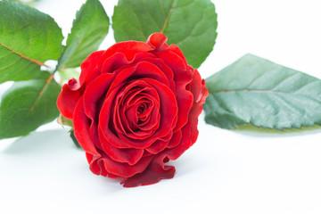 St.Valentine's day gift