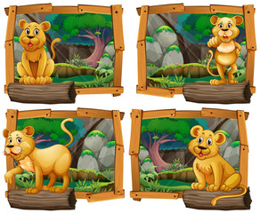 Four scenes of lion in the forest