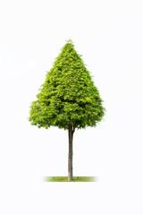 landscape tree isolated