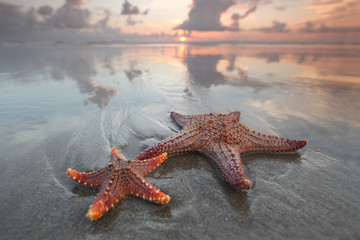Two starfish on summer beach