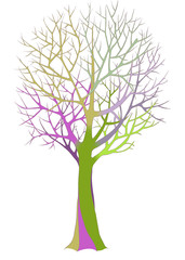 Big bare tree with detailed branches and twigs. Color vector illustration.