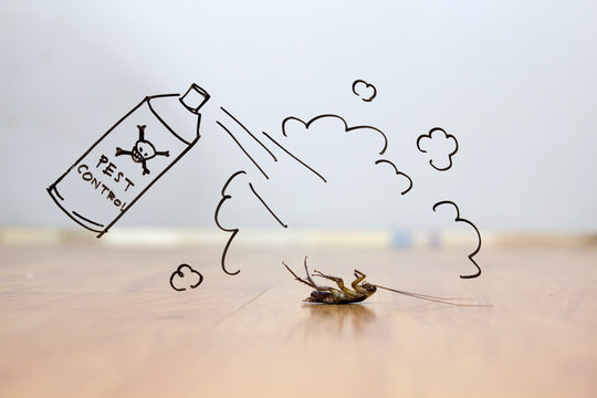 Dead cockroach on floor , pest control concept