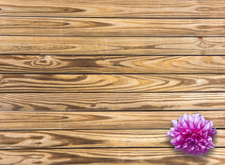 DAHLIA on wood background with copy space. Top view.