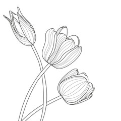 Beautiful tulip flowers line illustration. Vector abstract black