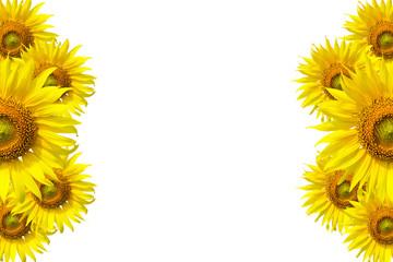 Sunflower Background for presentation/Sunflo wer Background