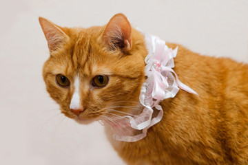 red cat and the garter of the bride.