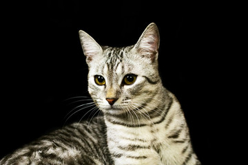 Cat on black background isolated