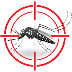Nature, Aedes aegypti mosquitoes with stilt target. sights signal