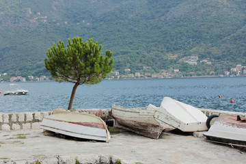 Lone pine and boats