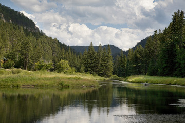 Trout stream in the Black Hills of South Dakota