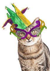 Funny Mardi Gras Cat