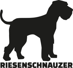 Giant Schnauzer with german breed name