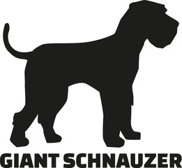 Giant Schnauzer with breed name