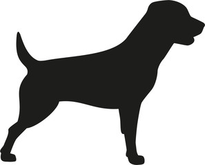 Rottweiler dog icon